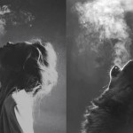 Cisza Klanu Wilka. Nauki Indian z plemienia Seneka