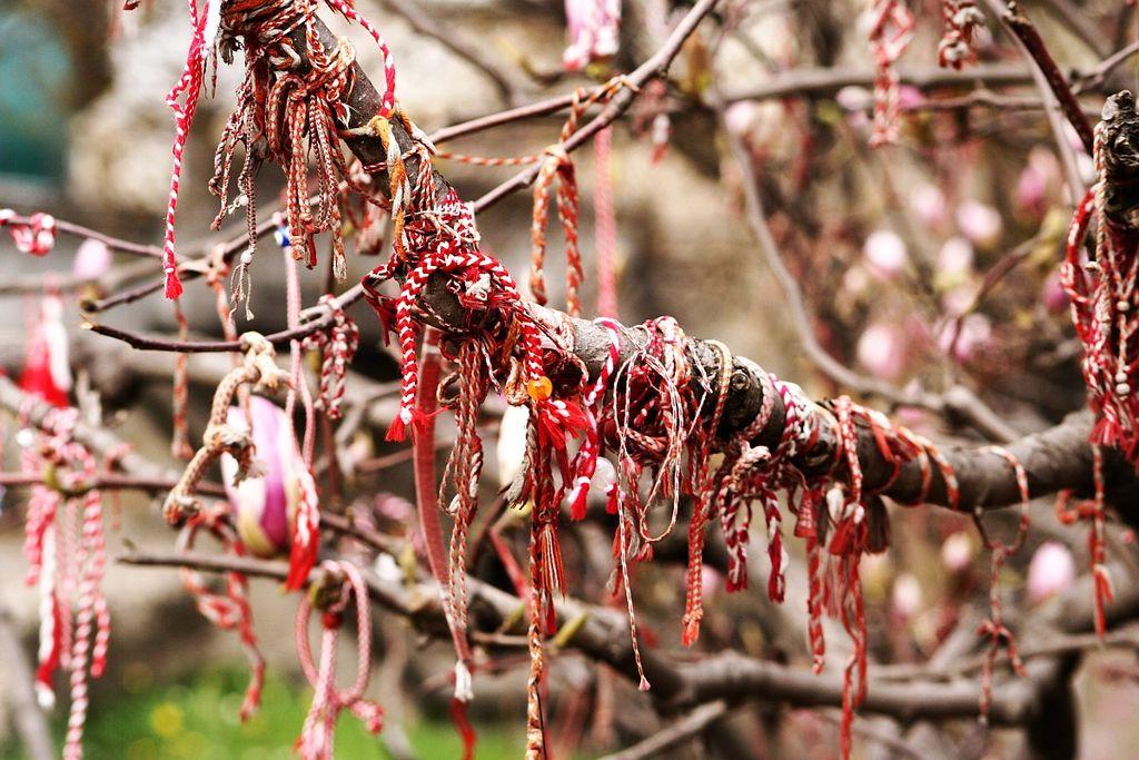 1024px-Martenitsa_magnolia