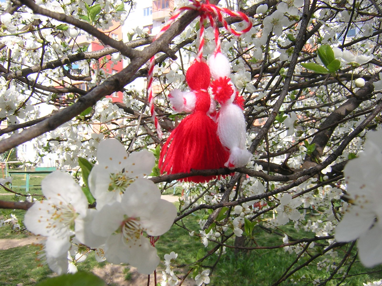 Martenitsa-blossom