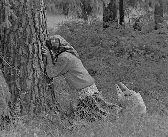 Kult drzew we współczesnej Rosji