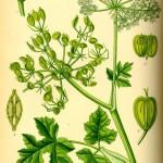 Etnobotanika w praktyce: dzika, darmowa kuchnia