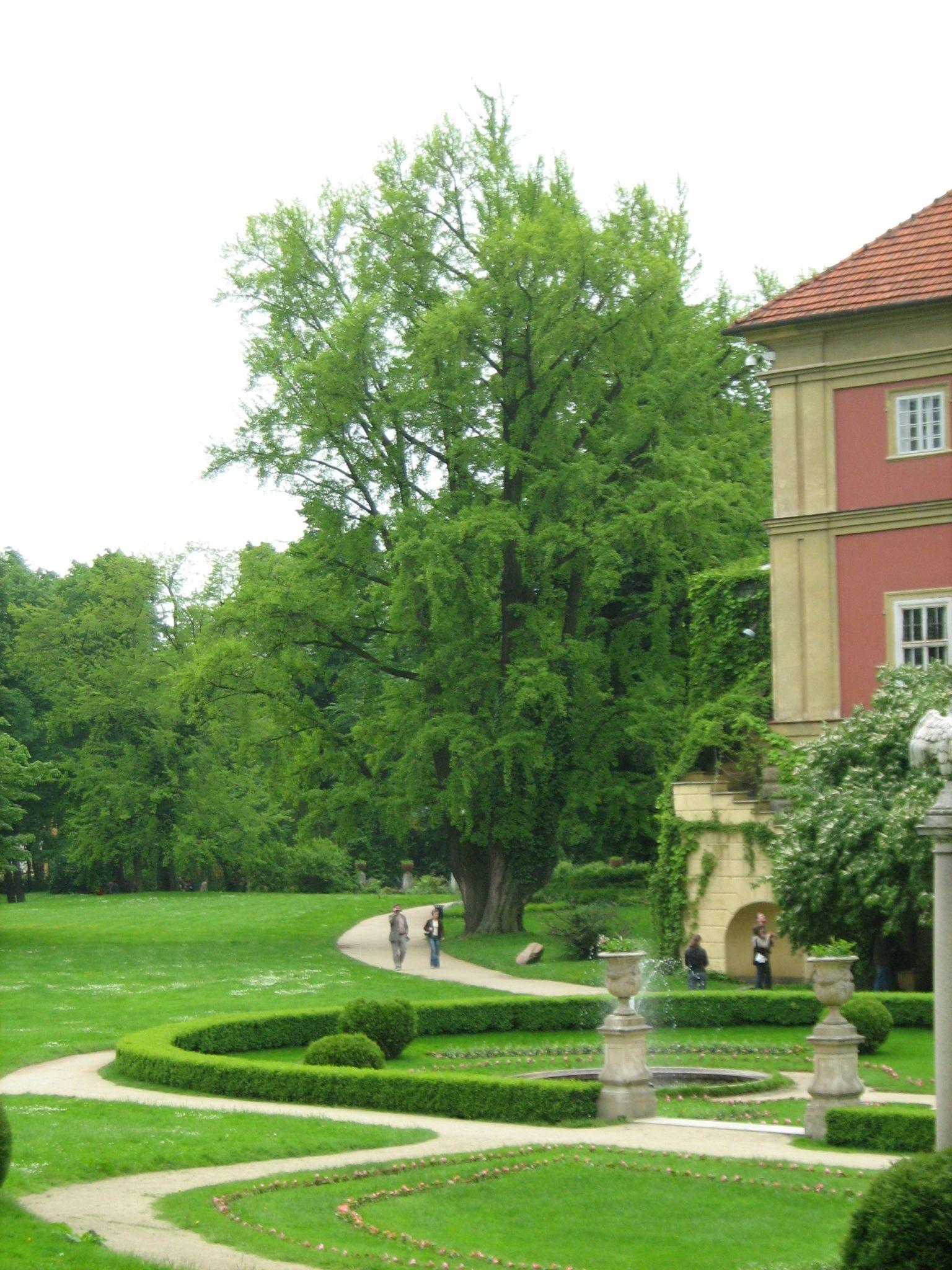 milorząb w łańcucie – najstrszy w Polsce