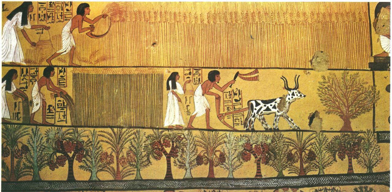 pierwsi rolnicy egipt